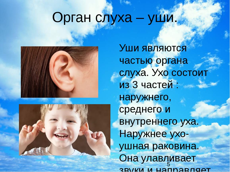 Орган слуха – уши. Уши являются частью органа слуха. Ухо состоит из 3 частей...