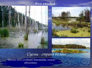 "Финляндия ""Суоми - страна болот"" Многие леса ,особенно Финляндии, сильно забо"