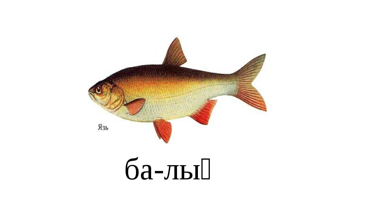 ба-лық