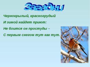 Чернокрылый, красногрудый И зимой найдет приют: Не боится он простуды – С пер