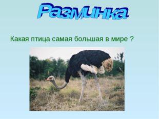 Какая птица самая большая в мире ?