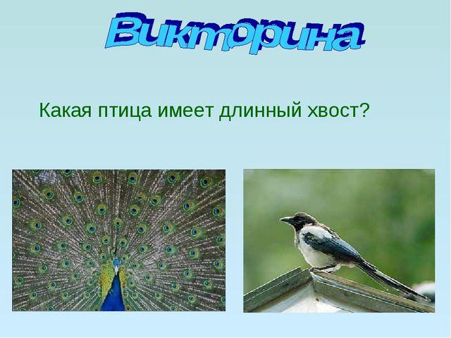 Какая птица имеет длинный хвост?