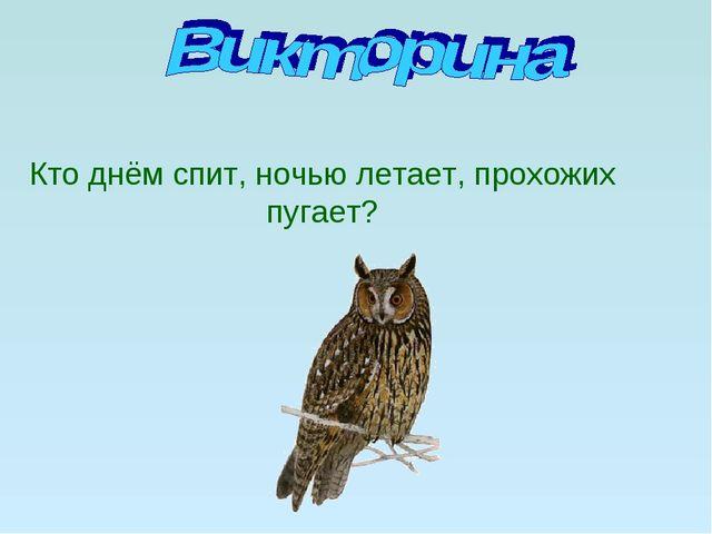 Кто днём спит, ночью летает, прохожих пугает?