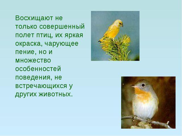 Восхищают не только совершенный полет птиц, их яркая окраска, чарующее пение...
