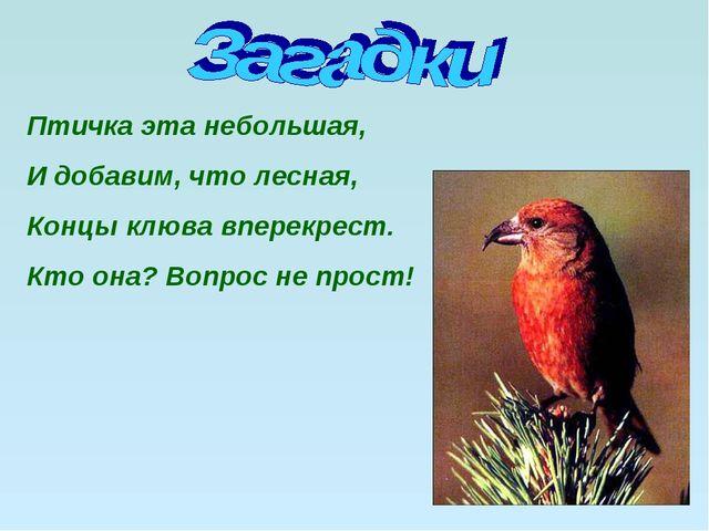 Птичка эта небольшая, И добавим, что лесная, Концы клюва вперекрест. Кто она?...