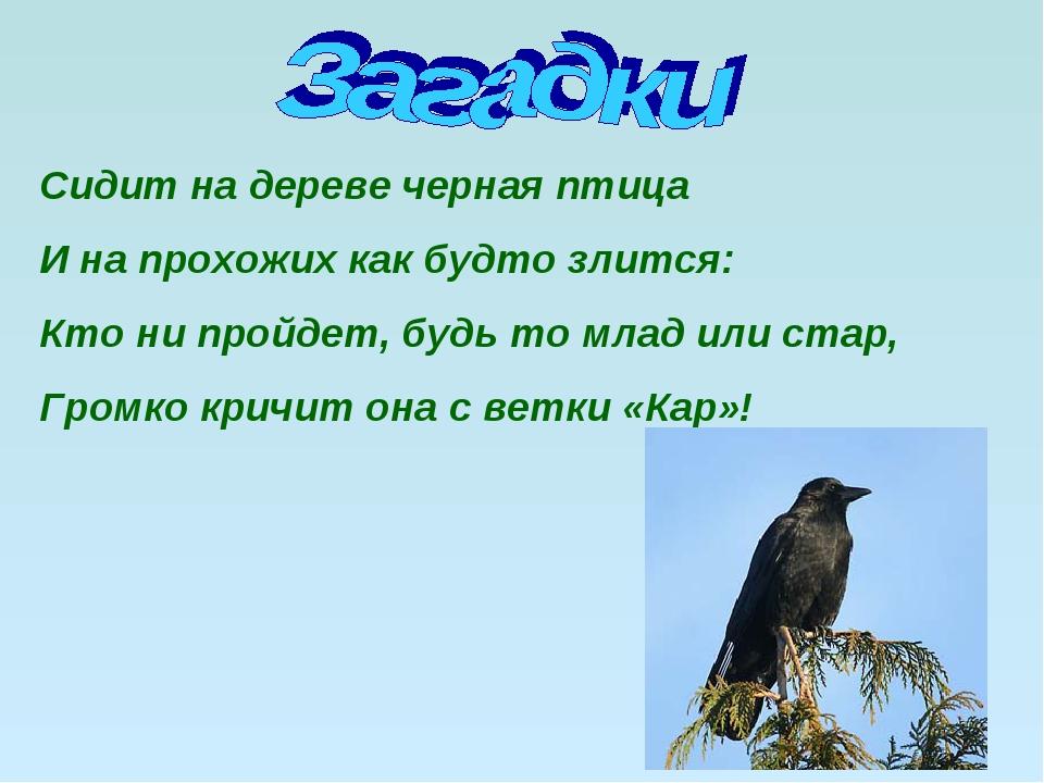 Сидит на дереве черная птица И на прохожих как будто злится: Кто ни пройдет,...
