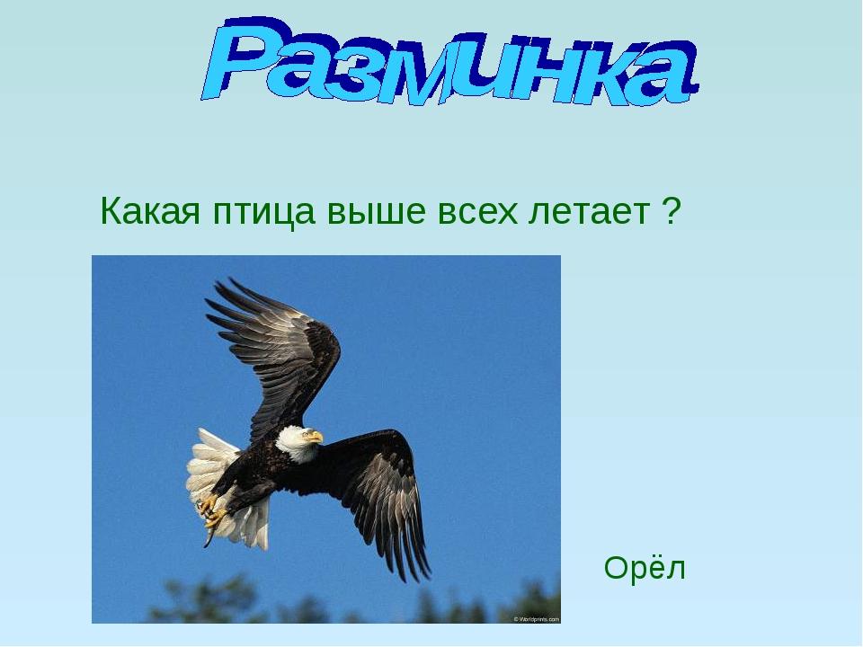 Какая птица выше всех летает ? Орёл