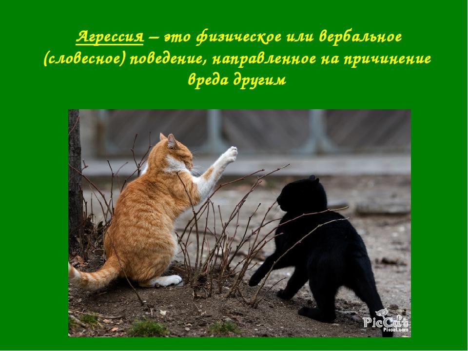 Агрессия – это физическое или вербальное (словесное) поведение, направленное...