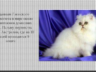 По данным Лионского университета в мире около 400 миллионов домашних кошек. П