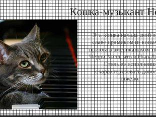 Кошка-музыкант Нора Эта кошка начала свой путь к славе прямиком из кошачьего