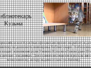 Библиотекарь Кузьма В Новороссийске кот Кузя был официально принят на работу
