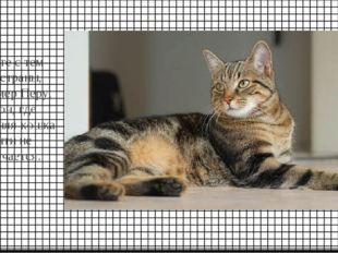 Вместе с тем есть страны, например Перу, Габон, где домашняя кошка почти не в
