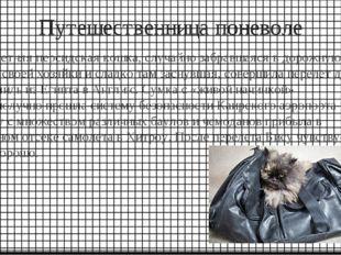 Путешественница поневоле Семилетняя персидская кошка, случайно забравшаяся в