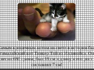 Самым крошечным котом на свете в истории был гималайский кот Тинкер Той из Ил