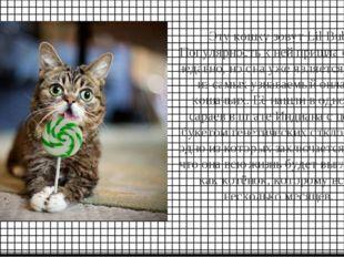 Эту кошку зовут Lil Bub. Популярность к ней пришла совсем недавно, но она уже