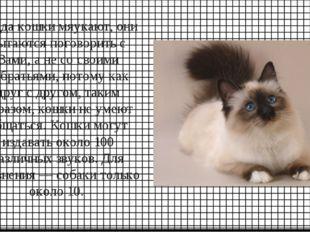 Когда кошки мяукают, они пытаются поговорить с Вами, а не со своими собратьям