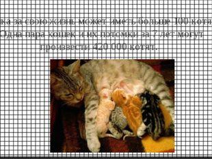 Кошка за свою жизнь может иметь больше 100 котят. Одна пара кошек и их потомк