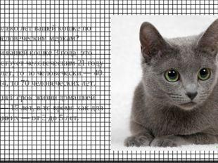 Сколько лет вашей кошке по человеческим меркам? Если вашей кошке 3 года, это