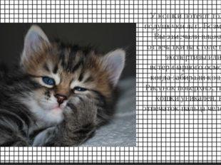 У кошки потеют только подушечки лап. Возможно, Вы замечали влажные отпечатки