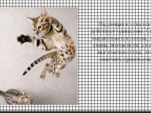 Падающая кошка всегда действует одинаково. Сначала выравнивается голова, пото