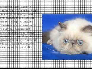 Чувствительность кошки к громкости звука в 3 раза выше, чем у человека! (Если
