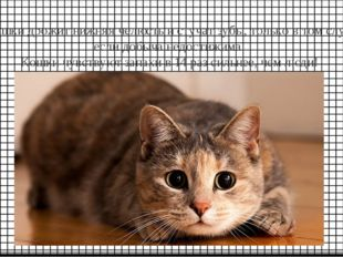 У кошки дрожит нижняя челюсть и стучат зубы, только в том случае, если добыча