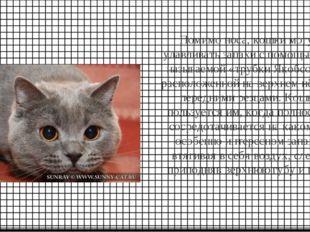 Помимо носа, кошки могут улавливать запахи с помощью так называемой «трубки