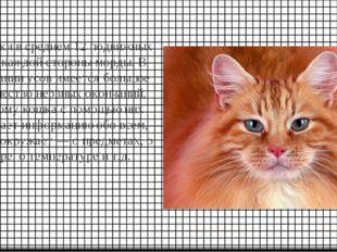 У кошки в среднем 12 подвижных уса с каждой стороны морды. В основании усов и