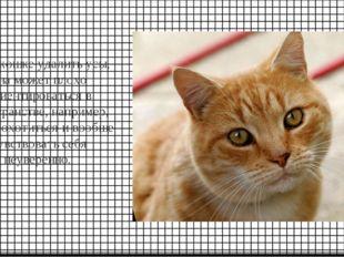 Если кошке удалить усы, она может плохо ориентироваться в пространстве, напри