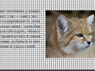 Нервное состояние у кошки выдают уши — они у нее мелко подергиваются, хотя са