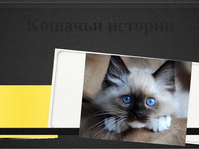 Кошачьи истории