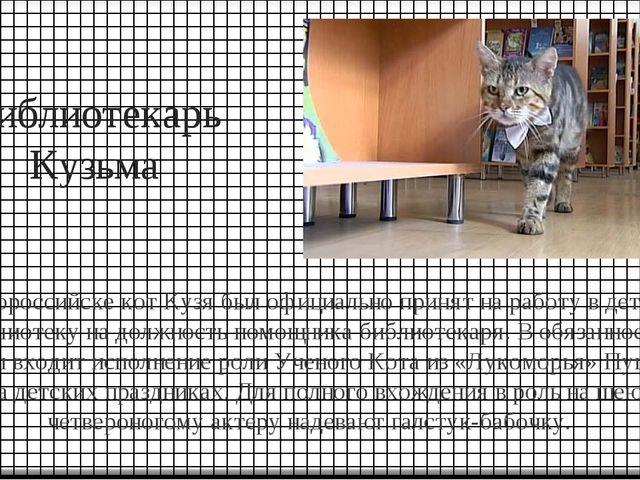 Библиотекарь Кузьма В Новороссийске кот Кузя был официально принят на работу...