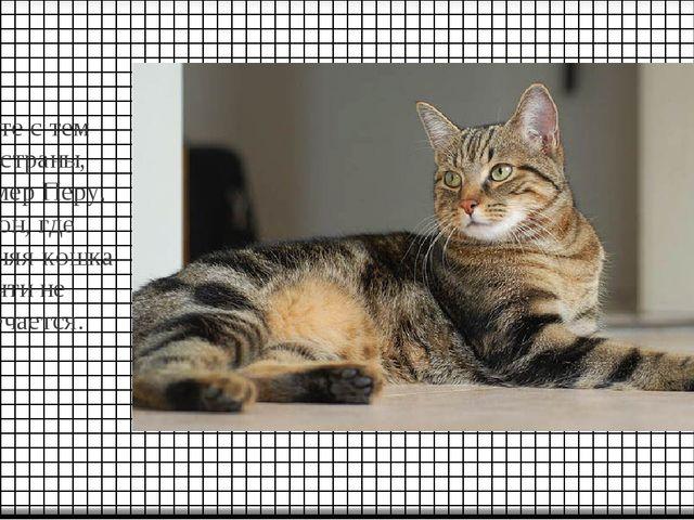 Вместе с тем есть страны, например Перу, Габон, где домашняя кошка почти не в...