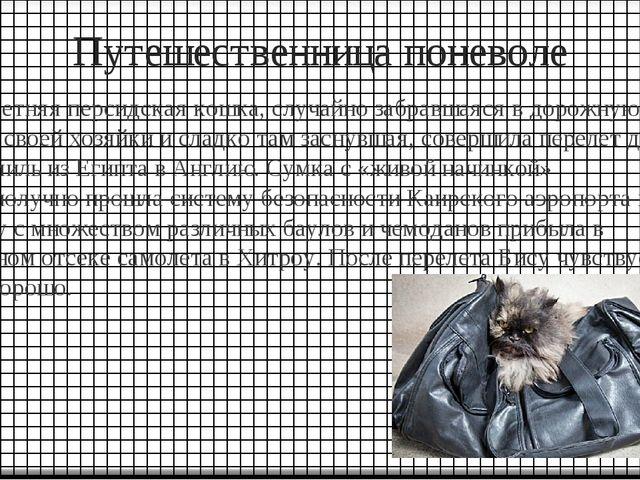 Путешественница поневоле Семилетняя персидская кошка, случайно забравшаяся в...