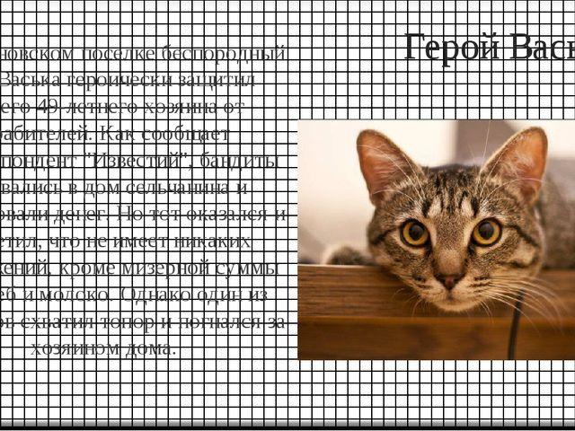 Герой Васька В Ульяновском поселке беспородный кот Васька героически защитил...