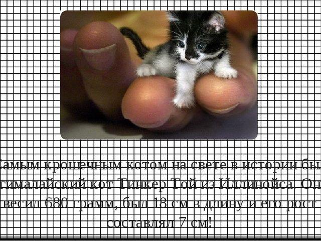 Самым крошечным котом на свете в истории был гималайский кот Тинкер Той из Ил...
