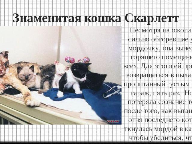 Знаменитая кошка Скарлетт Несмотря на ожоги глаз, сильно обгоревшие уши и мор...