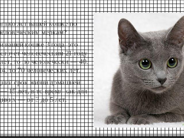 Сколько лет вашей кошке по человеческим меркам? Если вашей кошке 3 года, это...