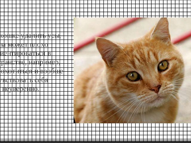 Если кошке удалить усы, она может плохо ориентироваться в пространстве, напри...
