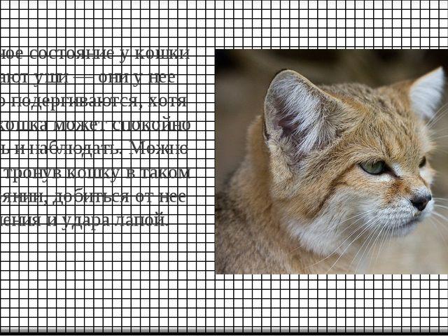 Нервное состояние у кошки выдают уши — они у нее мелко подергиваются, хотя са...