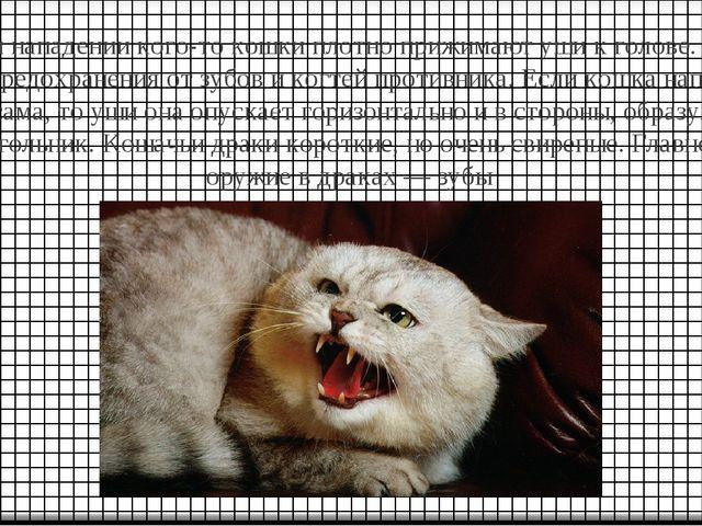 При нападении кого-то кошки плотно прижимают уши к голове. Это для предохране...