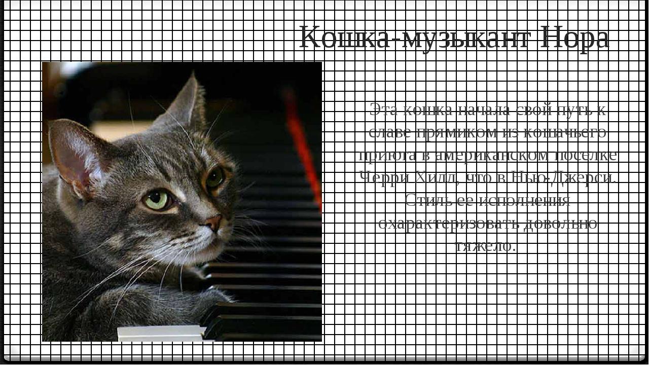 Кошка-музыкант Нора Эта кошка начала свой путь к славе прямиком из кошачьего...