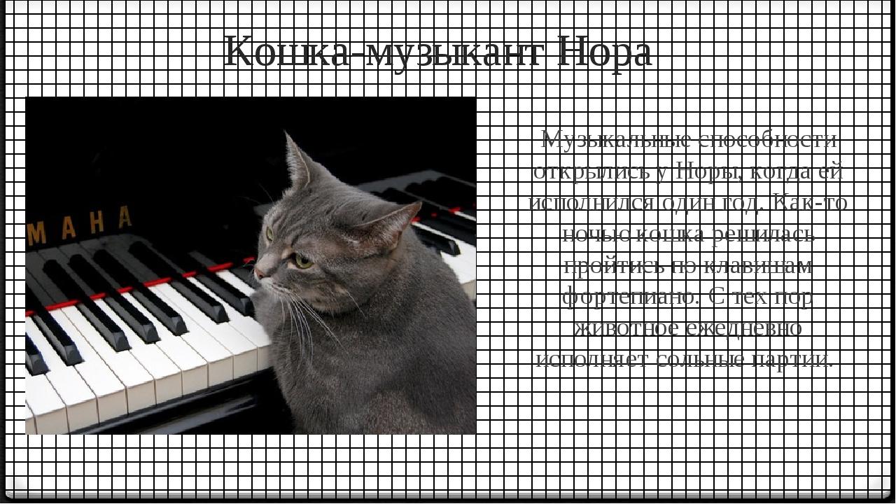 Кошка-музыкант Нора Музыкальные способности открылись у Норы, когда ей исполн...