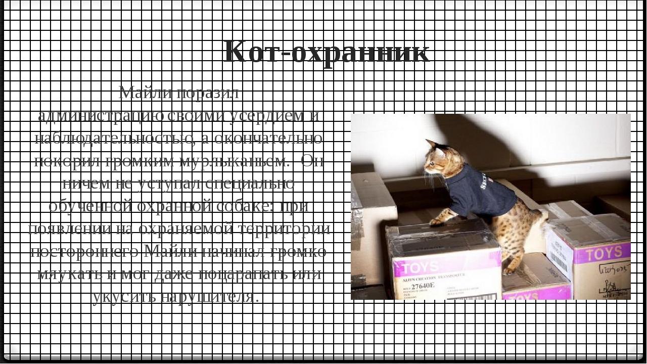 Кот-охранник Майли поразил администрациюсвоими усердием и наблюдательностью,...