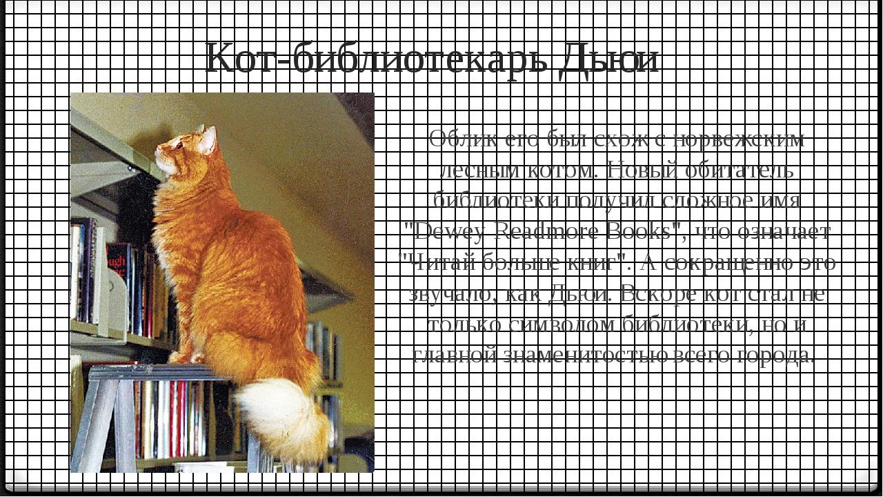 Кот-библиотекарь Дьюи Облик его был схож с норвежским лесным котом. Новый оби...