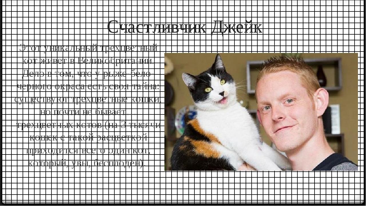 Счастливчик Джейк Этот уникальный трехцветный кот живет в Великобритании. Дел...