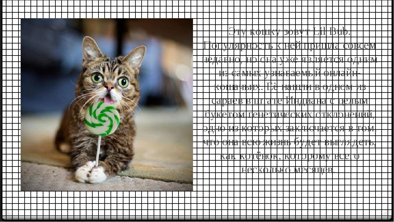 Эту кошку зовут Lil Bub. Популярность к ней пришла совсем недавно, но она уже...