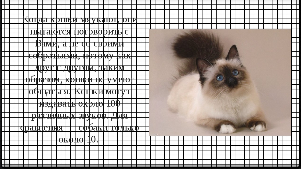 Когда кошки мяукают, они пытаются поговорить с Вами, а не со своими собратьям...
