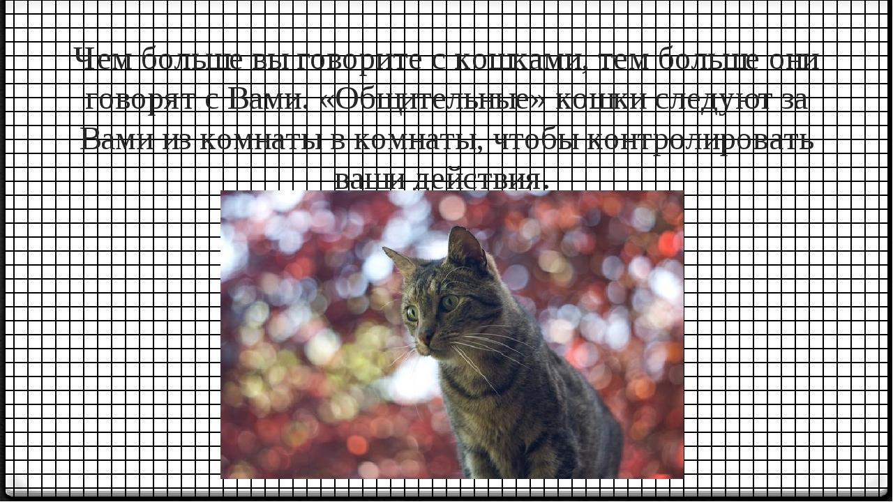 Чем больше вы говорите с кошками, тем больше они говорят с Вами. «Общительные...