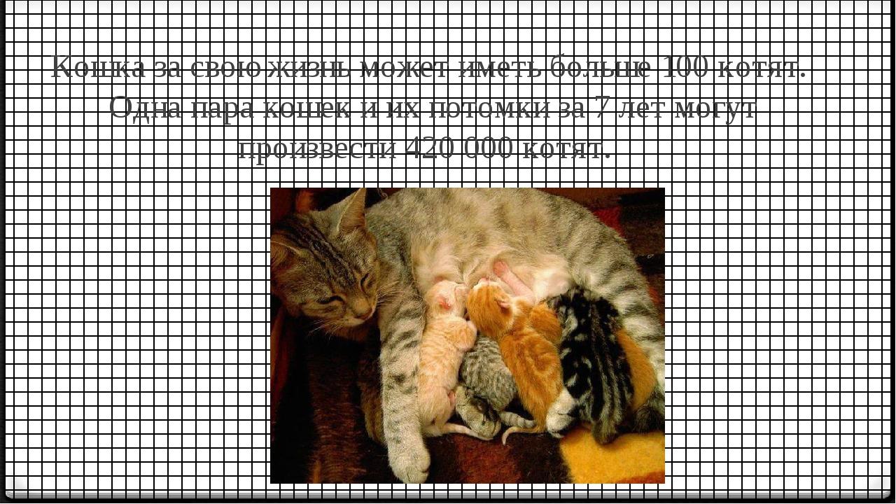 Кошка за свою жизнь может иметь больше 100 котят. Одна пара кошек и их потомк...